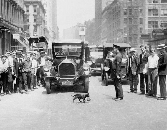 The Cat that stopped traffic. 1925 – New York. Photo: © Ph Harry Warnecke